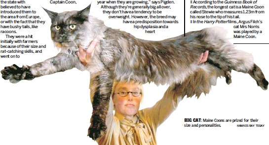 PressReader - Herald on Sunday: 2011-02-06 - Coons are the