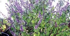 PressReader - The Guardian (Nigeria): 2017-09-30 - Herbs In