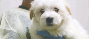 PressReader - Edmonton Journal: 2019-08-17 - Seized dogs