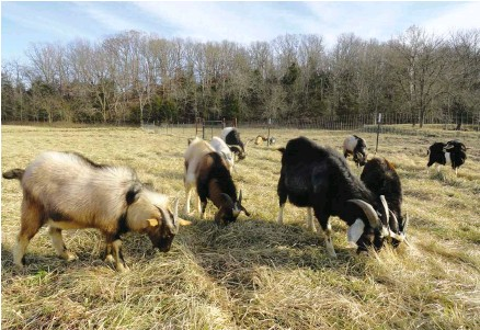 PressReader - Hobby Farms: 2019-06-25 - Sustainable Grazing