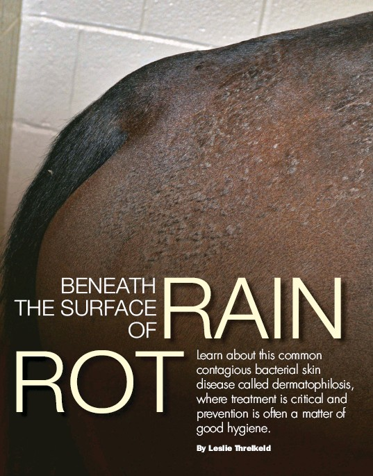 how to get rid of rain rot