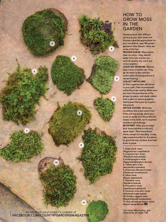 Pressreader Country Gardens 2018 08 03 How To Grow Moss In