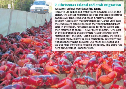 Christmas Island Red Crab.Pressreader The Sunday Times 2019 05 12 7 Christmas