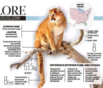 cougar et puma différence