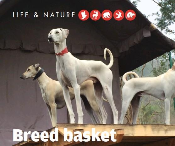 PressReader - Down to Earth: 2018-01-16 - Breed basket