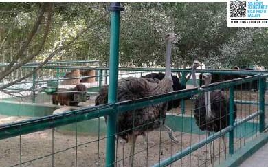 Zoo in oman
