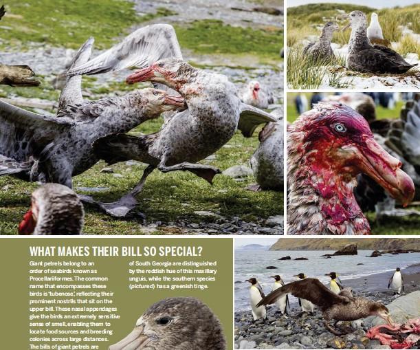PressReader - BBC Wildlife Magazine: 2018-01-17 - Vultures of the waves