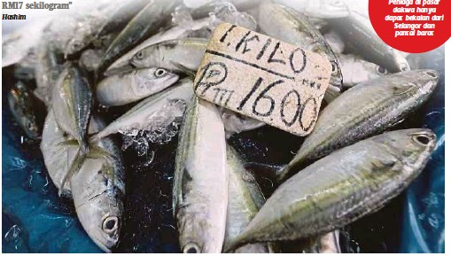 Image result for Gambar ikan kembung mahal
