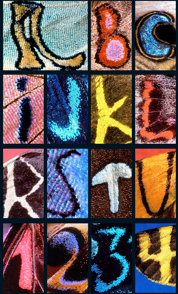 PressReader - Daily Mail: 2008-01-19 - THE BUTTERFLY ALPHABET