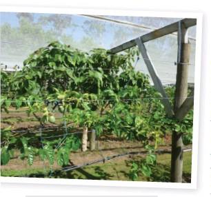 PressReader - The Orchardist: 2015-03-01 - Passionfruit