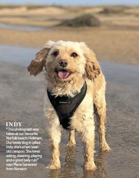 PressReader - EDP Norfolk: 2018-08-01 - Pets' parade: