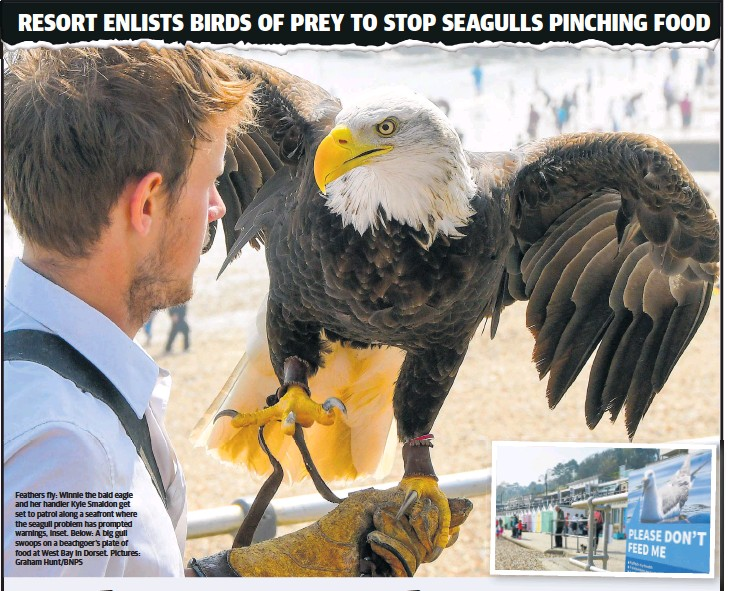 PressReader - The Sunday Times: 2019-05-12 - Where eagles scare